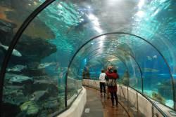 Aquarium Barcelona Enfant (Barcelone - Espagne)